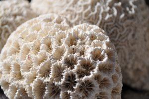 Coral, Reef